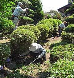 日本園芸協会【Japan Gardening Society】