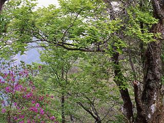 イヌサフラン(コルチカム)は、夏植え球根で花期は9月。